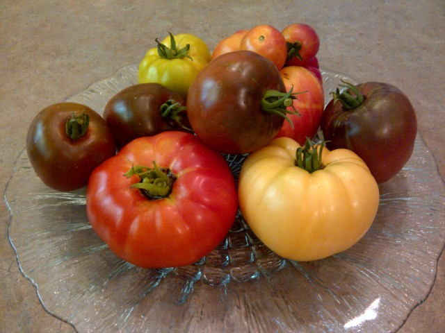 Our first tomato harvest of 2013