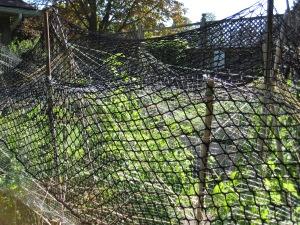 Netting tops raccoon palisade