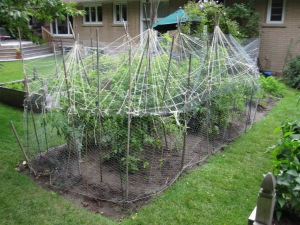 Tomato palisade with plastic chicken wire